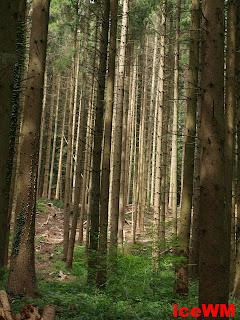 Ich seh' den Wald vor lauter Bäumen nicht !