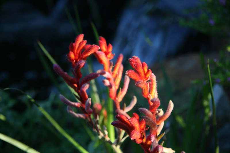 [flower_red.jpg]