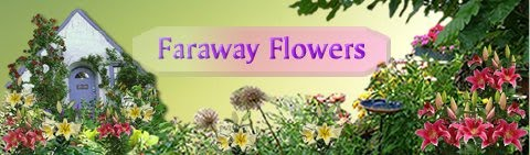 Faraway Flowers