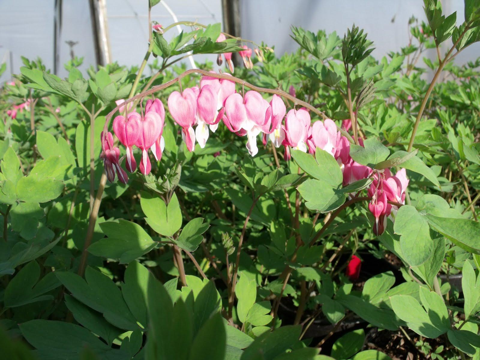 Beautiful Plants For Shade Shade Loving Plants