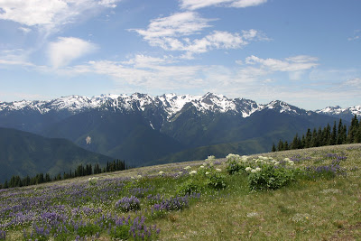 2008-07-13_04_Hurricane Ridge-Olympic NP_WA_b.jpg