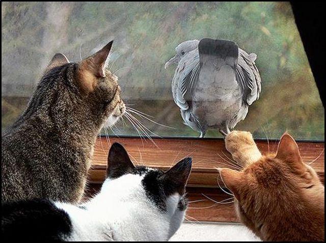 [cats1.aspx]