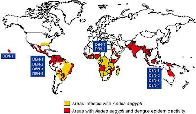 Kesehatan demam berdarah aedes aegypti merupakan jenis nyamuk yang dapat membawa virus dengue penyebab penyakit demam berdarah selain dengue a aegypti juga merupakan pembawa ccuart Image collections