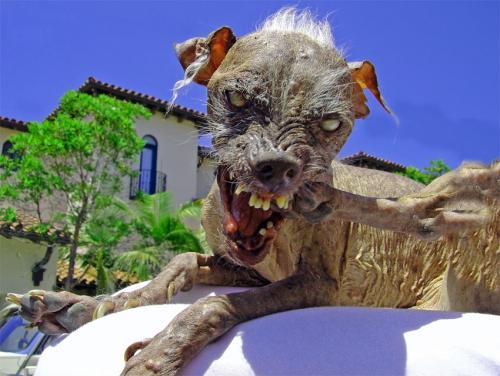 Los Cachorro Más Lindos Del Mundo