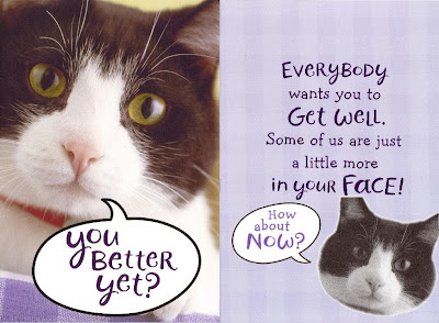 Purple card with a black and white kitty on it that says You better yet? Everybody wants you to get well, some of us are just a little more in your face! How about now?