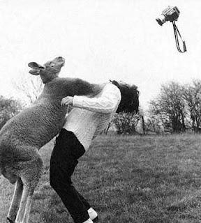 http://2.bp.blogspot.com/_e4cGlI1a934/S2HlY1OTQmI/AAAAAAAAAUY/4bhWaz8uZiE/s320/kangaroo.jpg