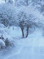 talvikuva2