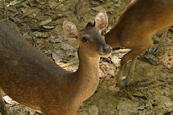 Deerland Park , Pahang