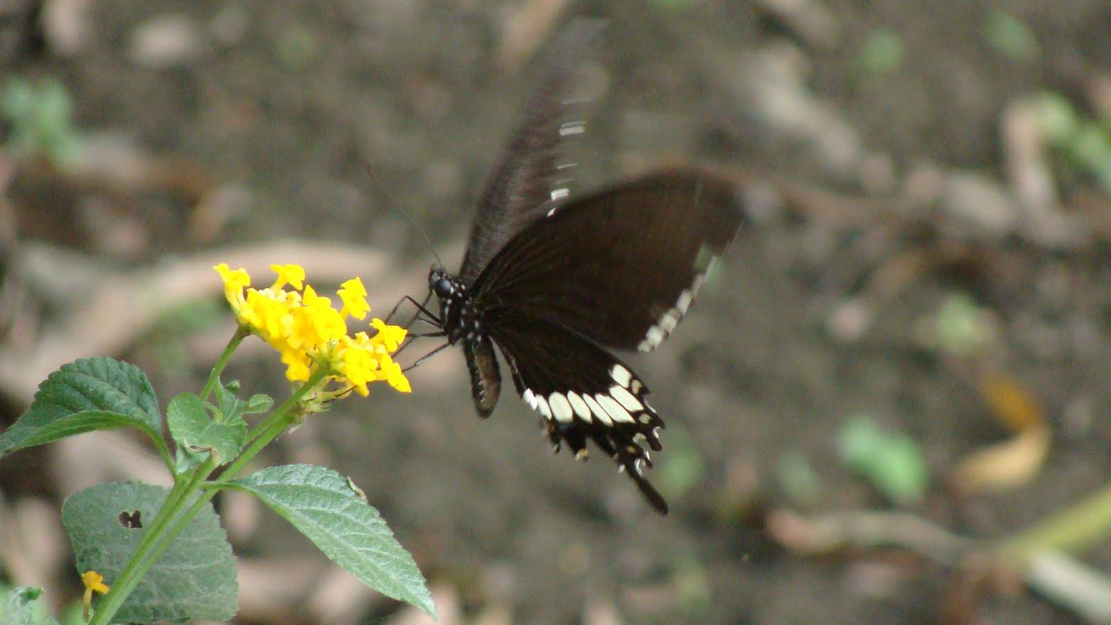India Garden: Butterfly garden