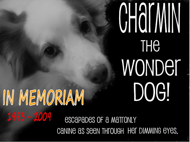Charmin the Wonder Dog!