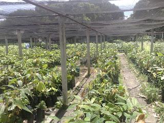 Precentrabajo inportancia de los viveros for Importancia economica ecologica y ambiental de los viveros forestales
