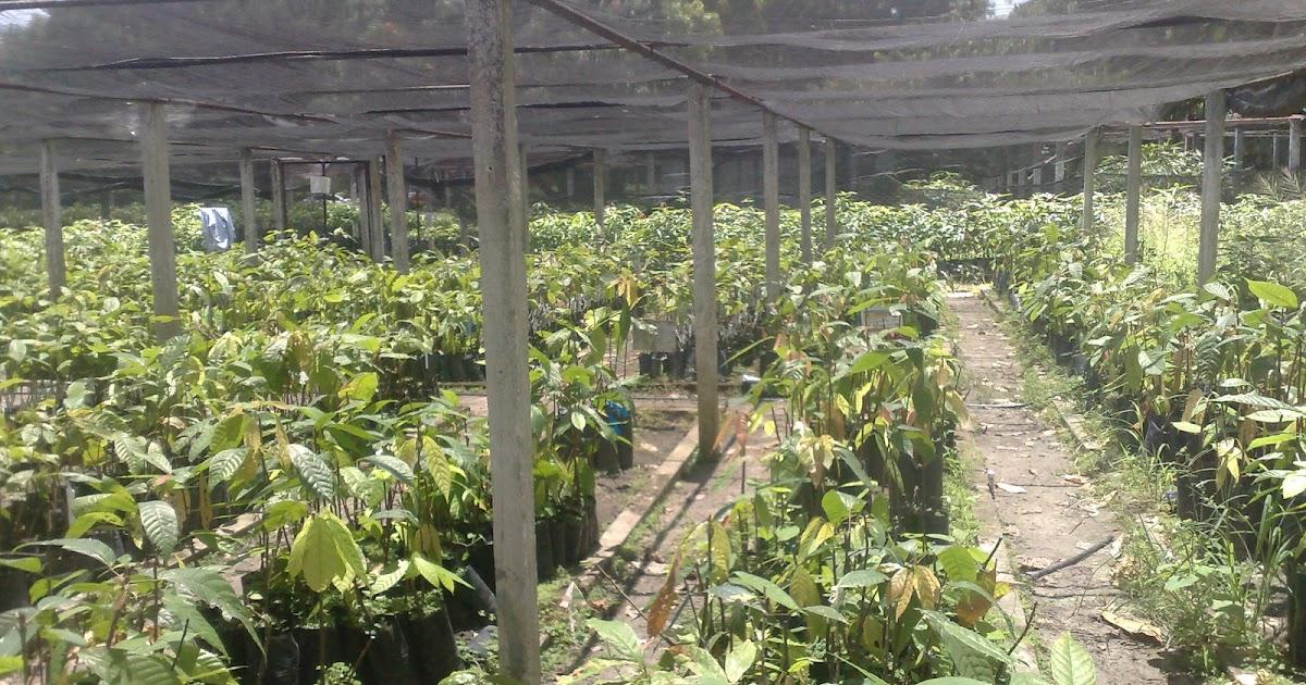Precentrabajo inportancia de los viveros for Factores para seleccionar el terreno para el vivero
