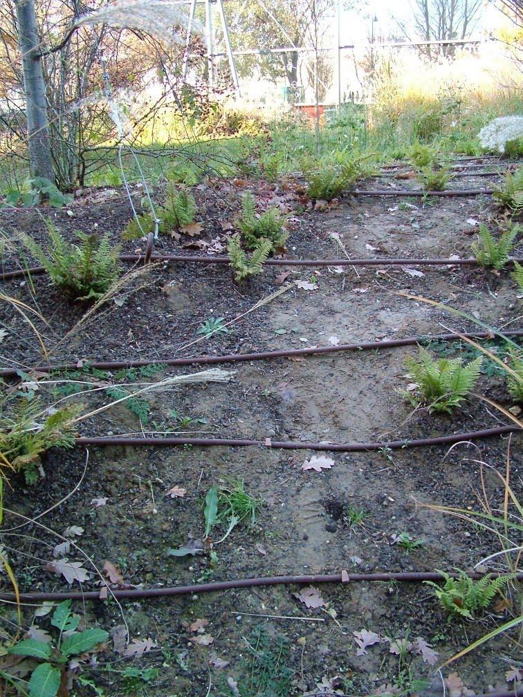 Robert Kouriks Garden Roots Proper Drip Irrigation Layout