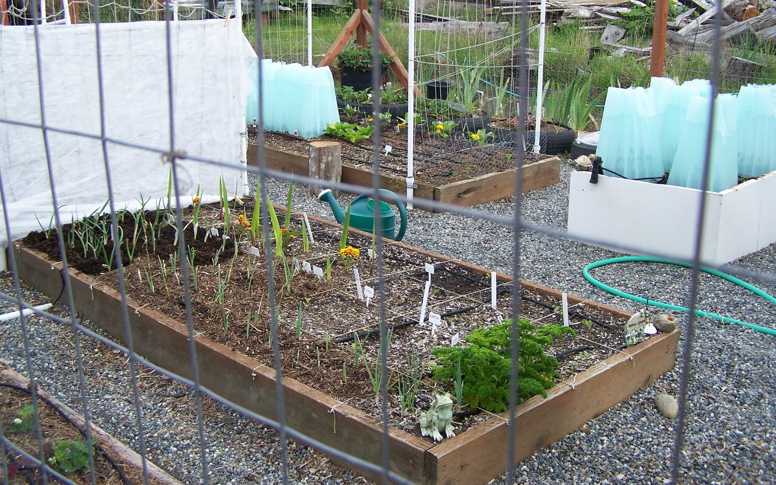 Keewee 39 s garden my fenced deer proof vegetable garden - Deer proof vegetable garden ideas ...