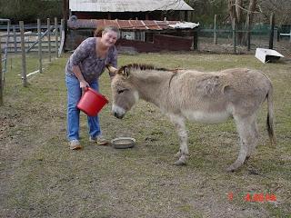Sheryl feeding her donkey