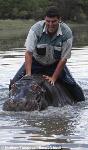 a man developed a friendship with hippo