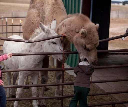 Funny Kid And Animal Pictures Part