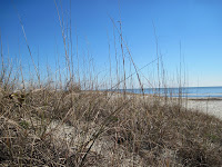 Sea Oats Hilton Head