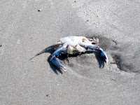 Blue Crab Hilton Head
