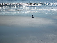 Lone Bird Beach Hilton Head