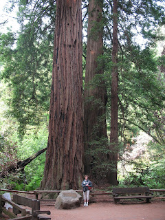 large redwood