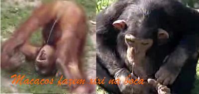 macacos fazem xixi na boca