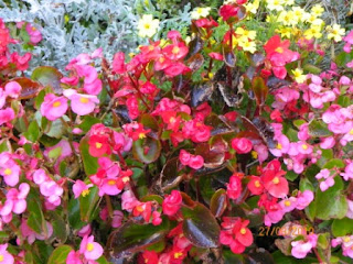 Flores en Seefeld in Tirol