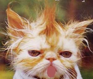 bad-haircut.jpg