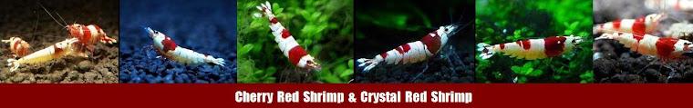 Planted Aquarium & Shrimp