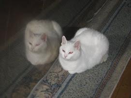 Katten vår :