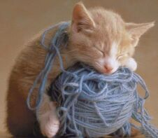 [kitty+&+yarn]