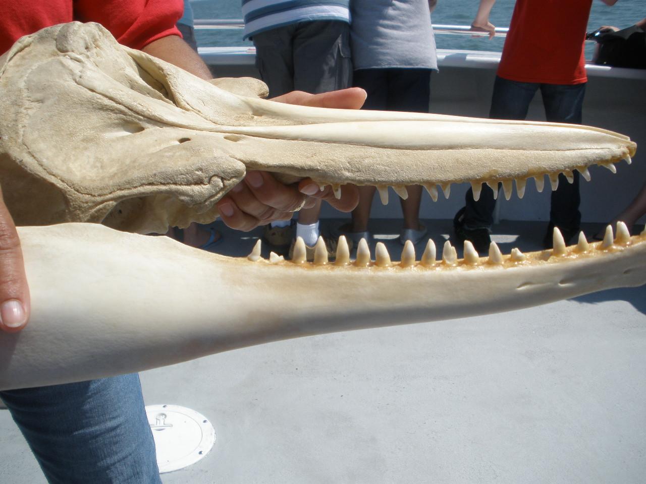 Merle 39 s whirls virginia beach dolphin watch for Rudee inlet fishing