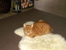 Maxwell (oder Mäx)...