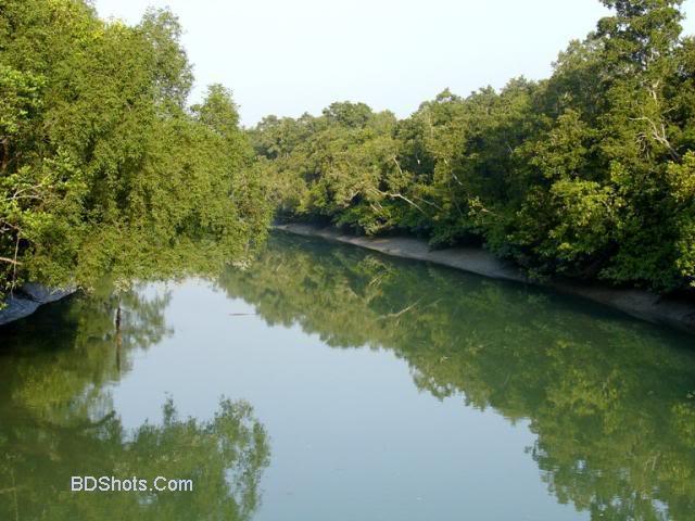 bangladesh vegetation
