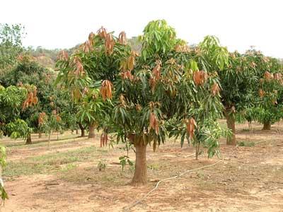tipos de plantas angiospermas octubre 2010