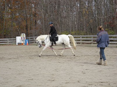 how to teach a young horse to lunge