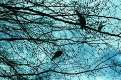 Pronto ....                                                                 El Libro de los Pájaros