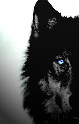ficha de saphira Lobo