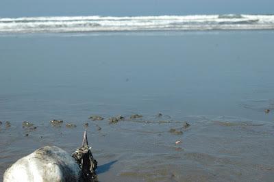 Dsc 6011 Itinerário Donde Miras   Sol, Mar e Natureza