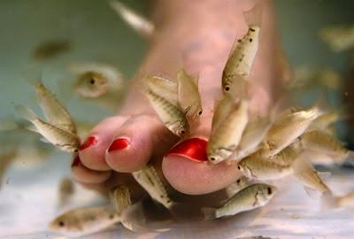 Fishing Pedicure, Il Nuovo Vizio Femminile