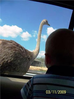 Child watching Ostrich at Lion Country Safari Photo Credit: Erin Franklin