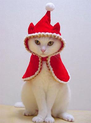 http://2.bp.blogspot.com/_eWM8SsyEfJA/SU_MNA08IaI/AAAAAAAAAG0/dZDElHo_3qs/s400/Christmas_Kitten.jpg