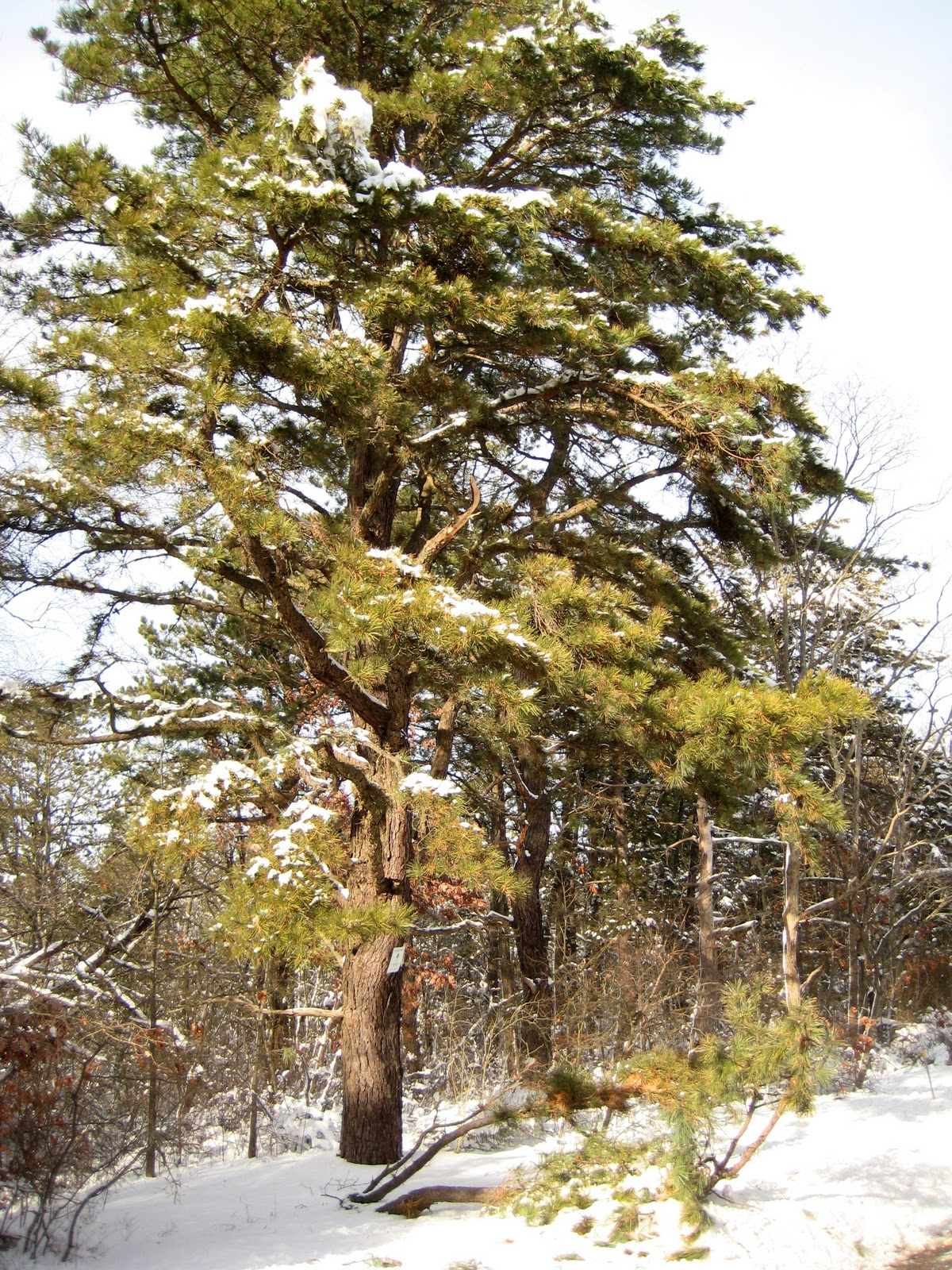 Long Island\'s Garden Girl ~: Surviving the Winter Weather