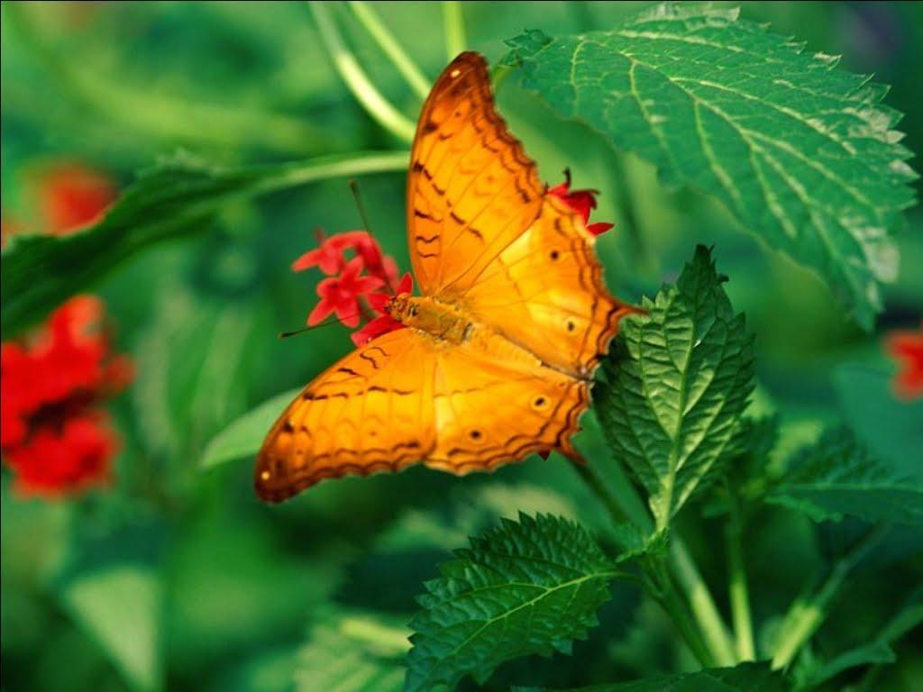 Gianna il bene in noi la bellezza della natura - Immagini da colorare della natura ...