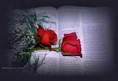 As melhores mensagens estão na Biblia Sagrada