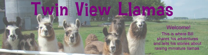 Twin View Llamas