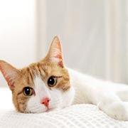 Cat Ziekte