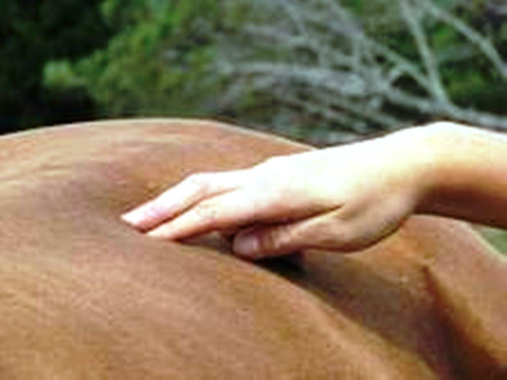Y el caballo es mi afición: LA IMPORTANCIA DEL MASAJE TERAPEUTICO