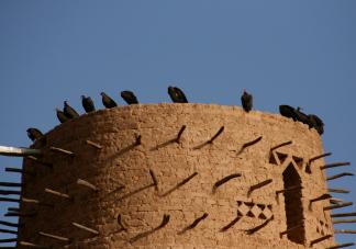 Vautours sur la tour de la mosqué