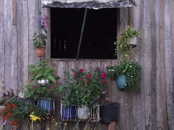 Casa em Calçoene